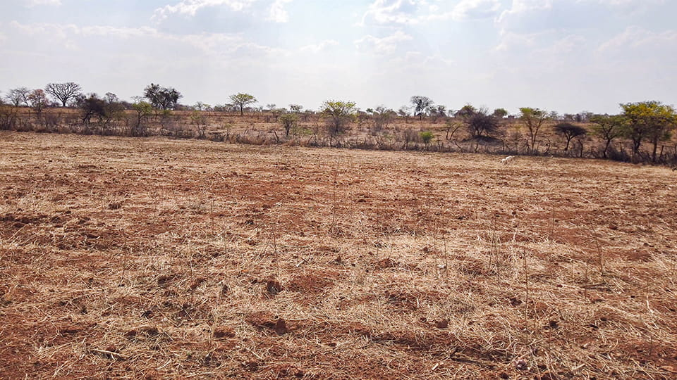 Florence's farm is barren. She hasn't been able to grow anything on her land for two years because of the severe drought.